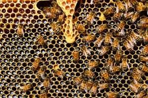 miel pura miel falsa